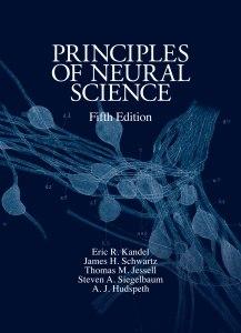 Principles neural